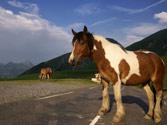 ¿Está permitida la circulación de animales por una carretera convencional? 1