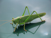 Expulsar a un insecto del vehículo mientras se conduce, ¿es peligroso? 1