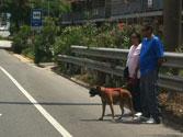 Muchos atropellos a peatones se producen cuando los vehículos... 1