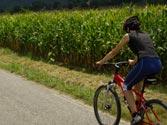 ¿Cuándo se producen más accidentes de ciclistas, en verano o en invierno? 1